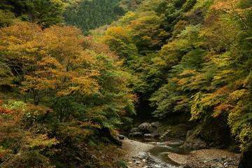 Nakatsukyou2008001