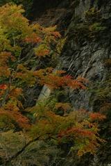 Nakatsukyou2008003